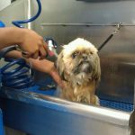Bathing services for your dog in Richmond, VA