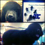 Big dog grooming in Richmond, VA