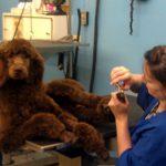 Dog toenail trimming in Richmond, VA.