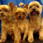 Multiple dog grooming in Richmond, VA.