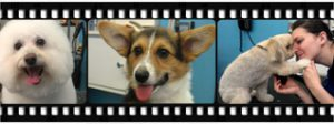 Photo Gallery of our furry friends in Richmond, VA.