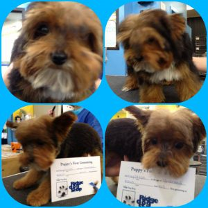 Puppy's first haircut in Richmond, VA.
