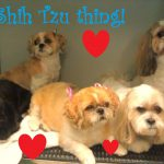 Shih-tzu grooming services in Richmond, VA.