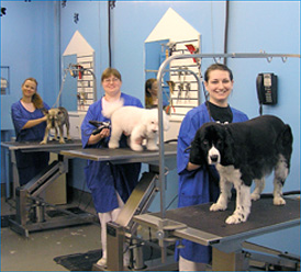 We have several dog grooming tables available in Richmond, VA