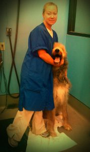We specialize in grooming large breeds in Richmond, VA.