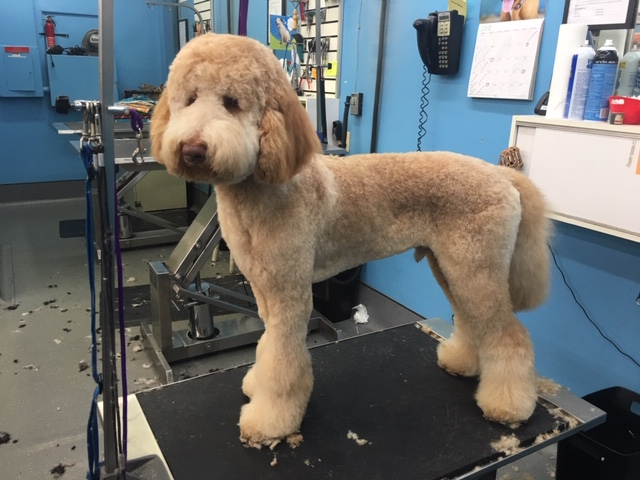 Personalized haircuts for your breed type