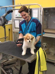 Personalized puppy service in Richmond, VA.